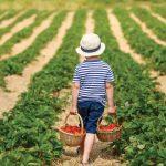 Agrotourism & Faliraki